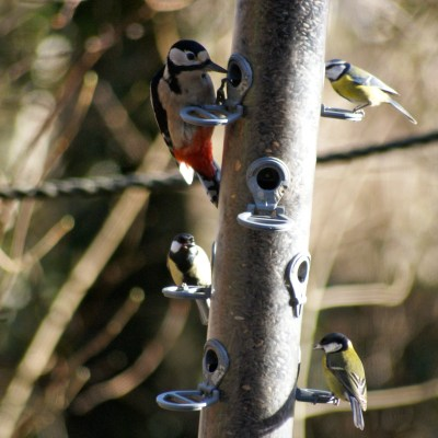 The RSPB Big Garden Birdwatch