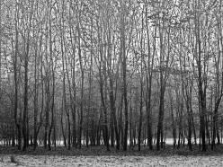 Bomenrij3