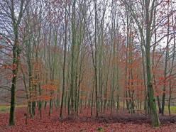 Bomenrij2