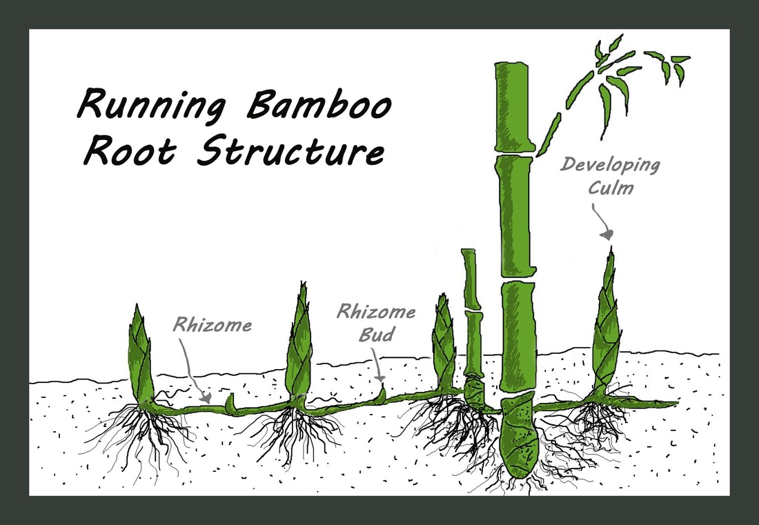 Bamboo: A Unique And Versatile Plant