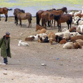 Nomade mit seiner Herde am Sailim-See