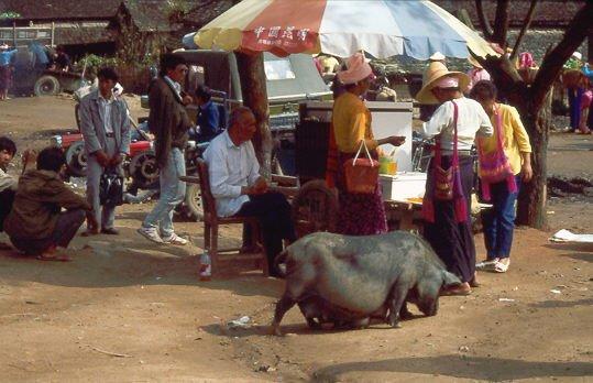 Schwein in Südchina