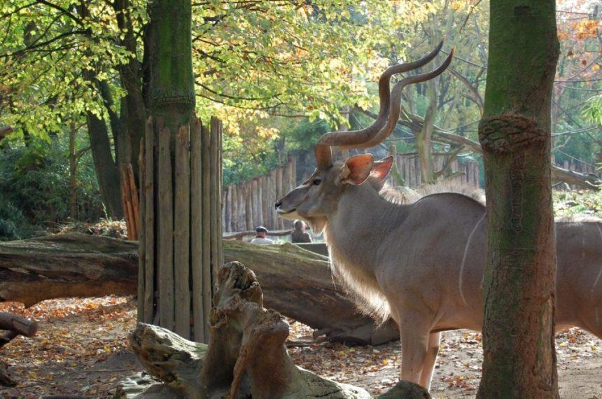 Duisburg033 1024x679 - Besuch im Duisburger Zoo