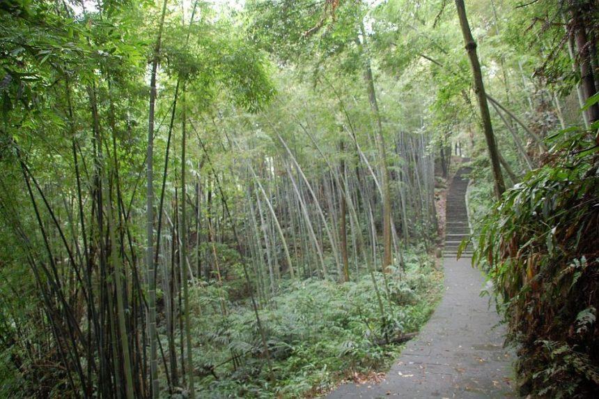 Wälder, Bambus, 100% Luftfeuchtigkeit prägen den 2. Teil des Trips