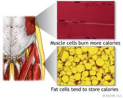 one pound of fat versus one pound of muscle