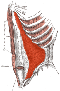 The Transverse Abdominis - The Spanx of Your Abdominal Muscles