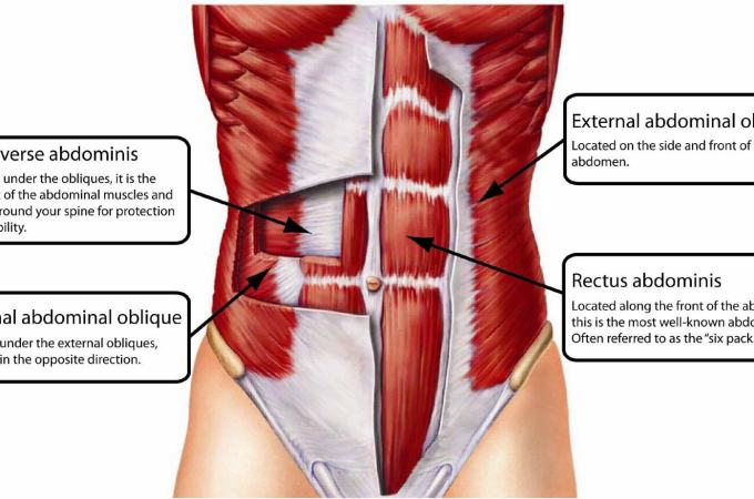 The Transverse Abdominis – The Spanx Of Your Abdominal Muscles