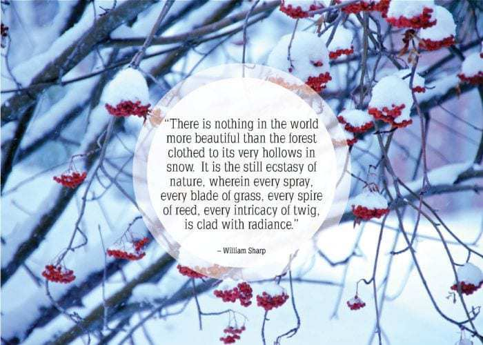 Quotes Of The Week  Snow
