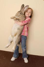 World's Largest Rabbit - Darius