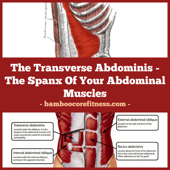 The Transverse Abdominis The Spanx Of Your Abdominal Muscles