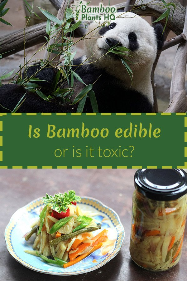 is bamboo edible or
