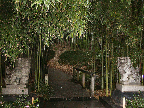 bamboo plants online florida