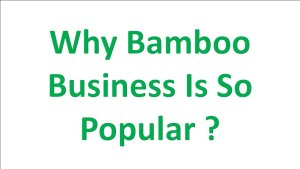 bamboo business