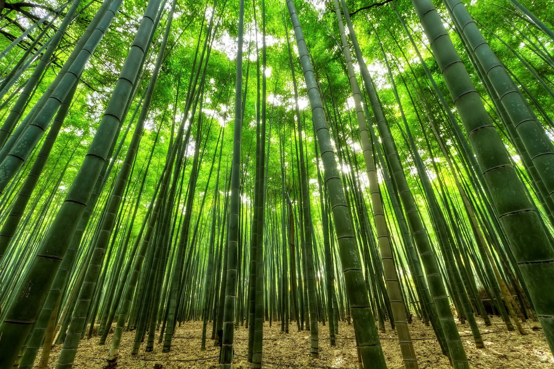 Bamboo Farming-Step By step Guide