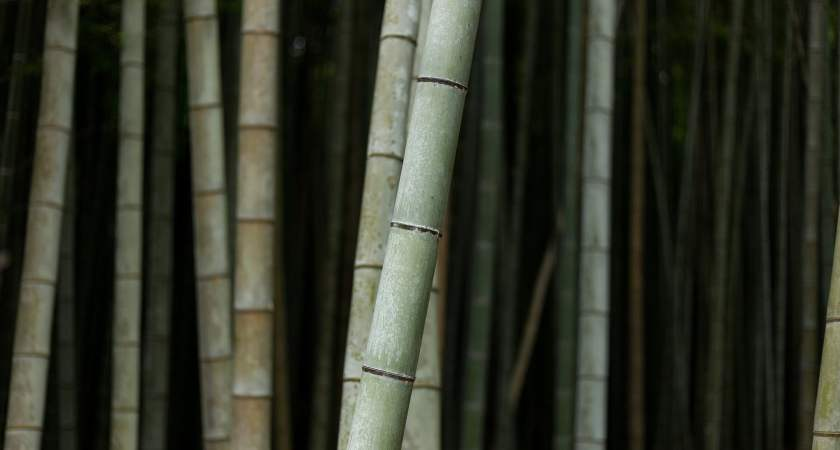 Bamboo Harvesting Period And Process You Should Not Ignore