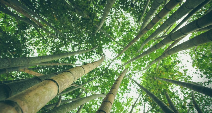 Tips On How To Grow Bamboo In Your Yard