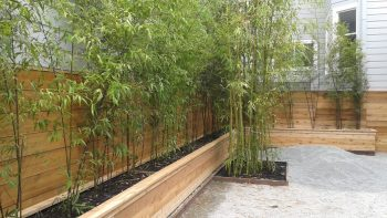 Bamboo For Privacy Screening Bamboo Sourcery Nursery