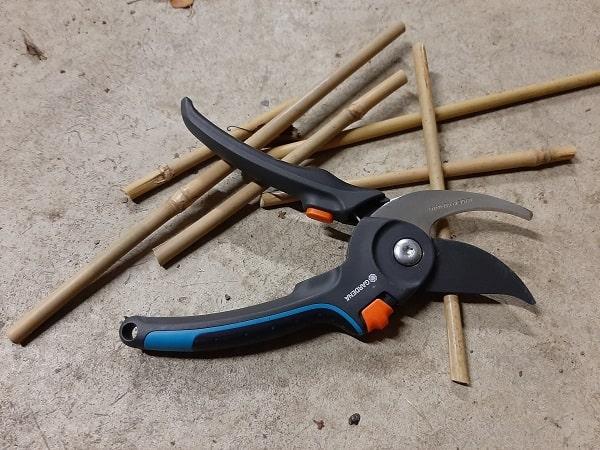 Couper un bambou avec un sécateur