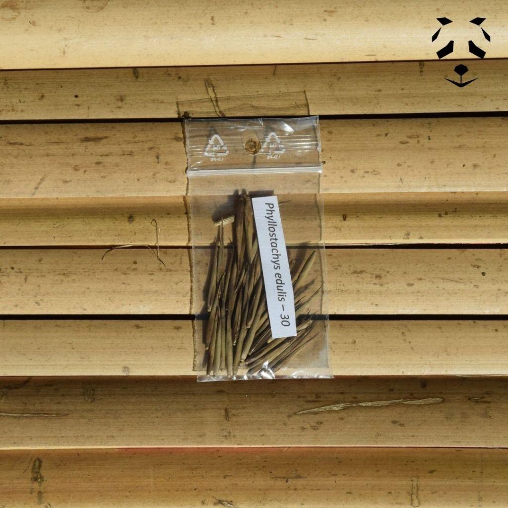 Graines de bambou Phyllostachys edulis