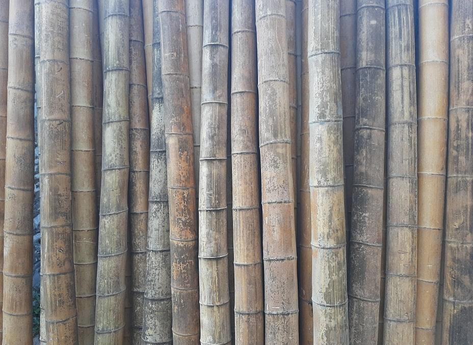 Bambou avec moisissures