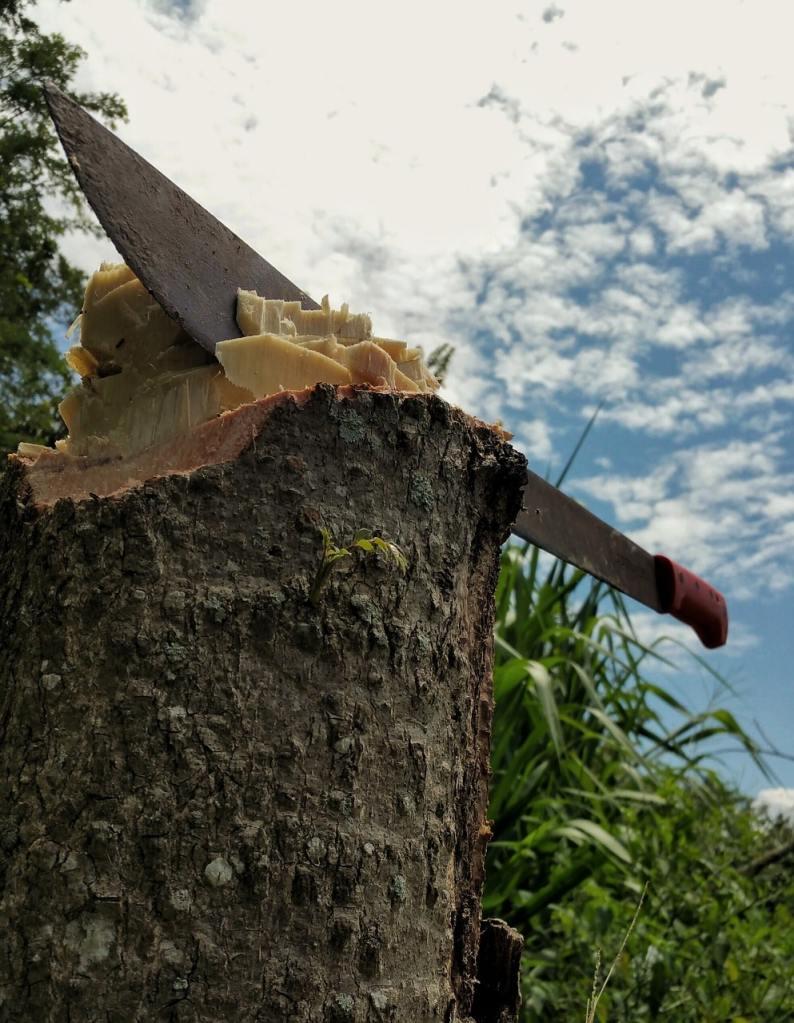 Machette pour travailler le bambou