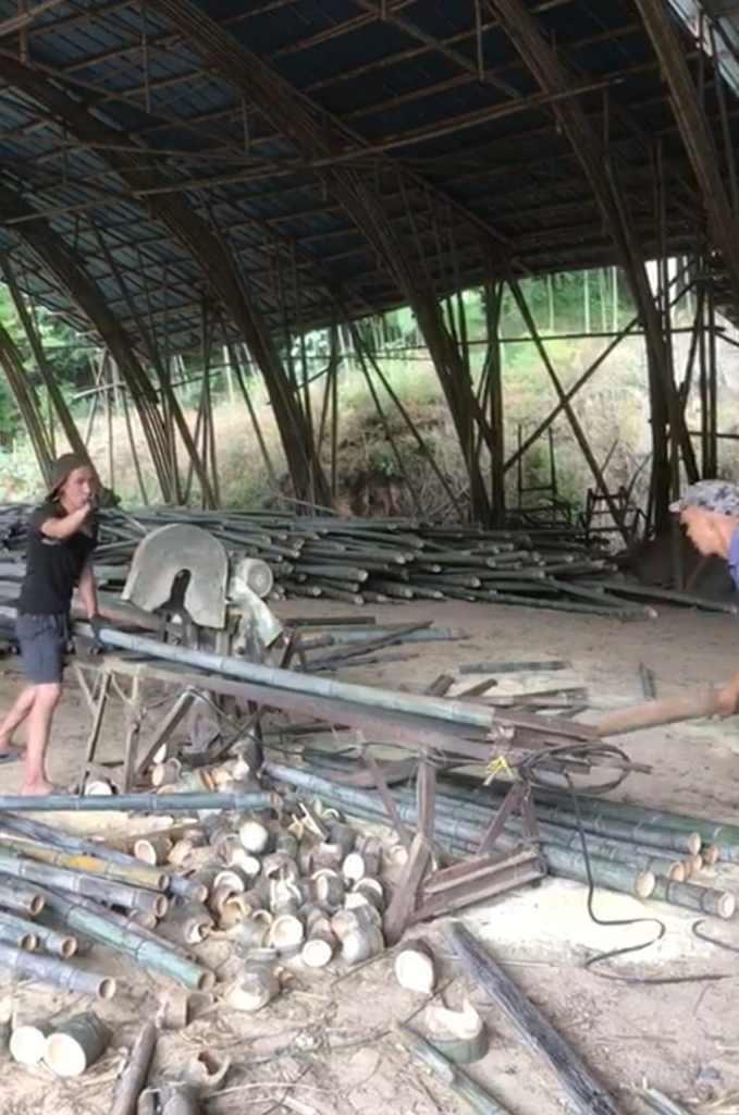 Découpe des cannes de bambou