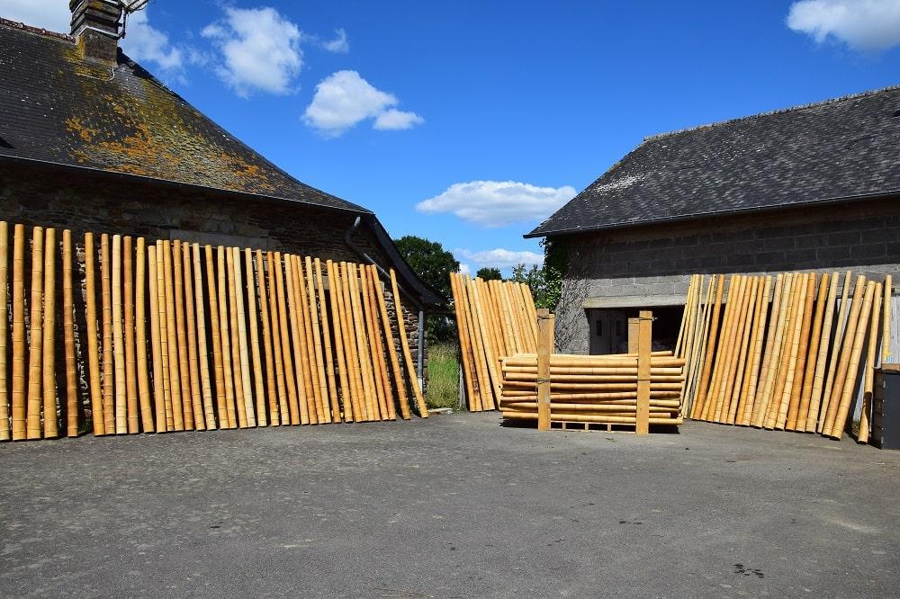 Tiges de bambou naturel sur Pandam