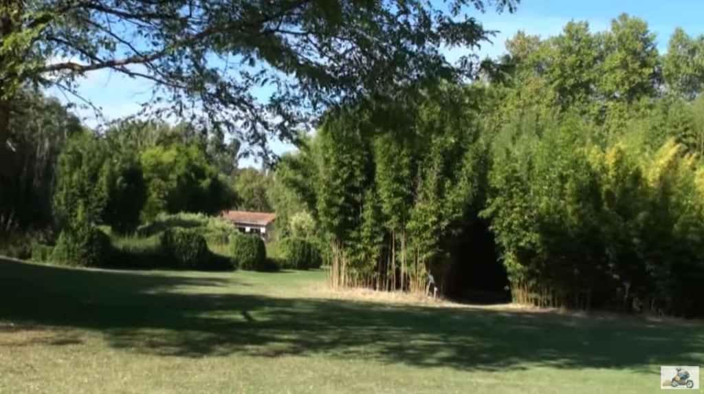 Forêt de bambous France