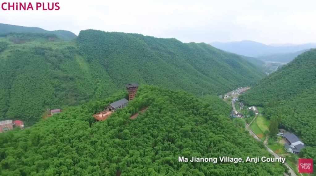 Forêt de bambous Yunqi