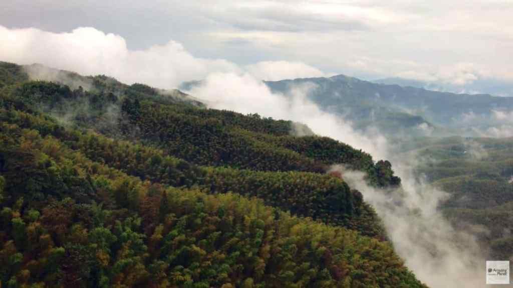 Forêt de bambous Shu'Nan