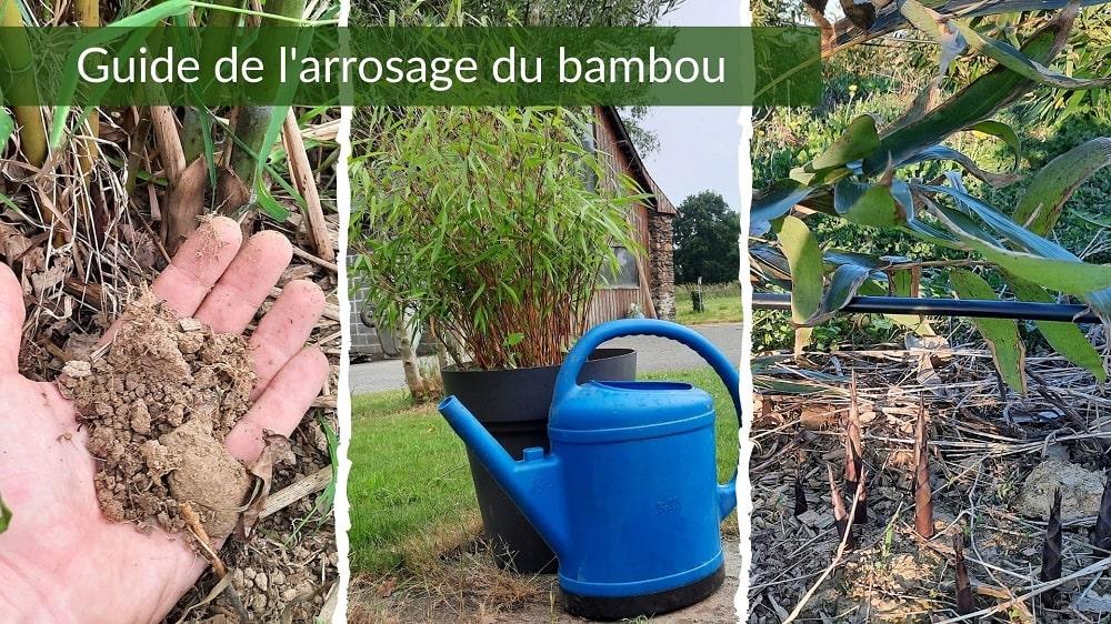 Arrosage du bambou