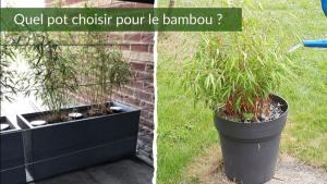 Pot pour bambou