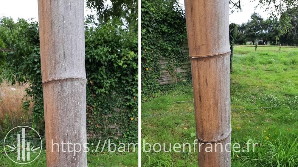 Bambou en extérieur