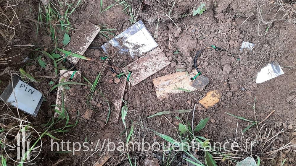 Echantillons de bambou sous terre