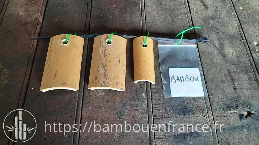 Echantillon de bambou
