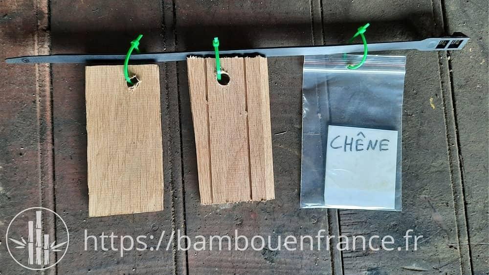 Echantillon de chêne