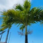 13 najpiękniejszych palm, jakie zobaczyłam w Dominikanie