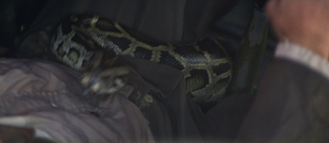 Indy faces his greatest fear during the pre-credits sequence of Raiders of the Lost Ark. Luckily, snakes don't have the dexterity to open a button fly or he'd be in real trouble.