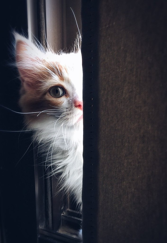 A kitten peers out from behind a wall, only one eye visible.