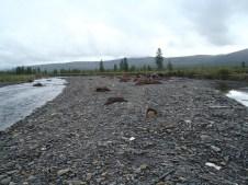 Old summer road river