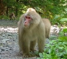 monkey-wild