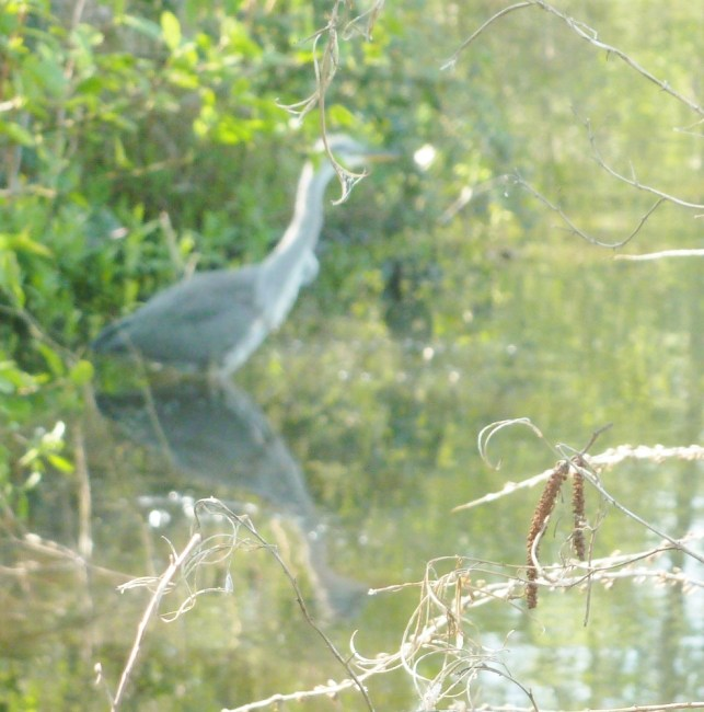 Der Reiher wartet auf die Fischlein