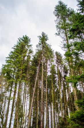 Woodlands on the way to Bracklinn Falls