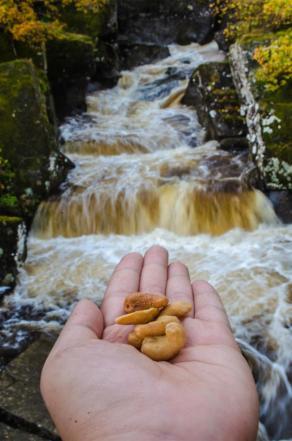 Cashew nuts and Bracklinn Falls ;)