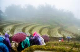 Foggy, rainy, muddy in Sapa...