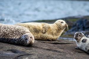 Seals near Loch Coruisk!