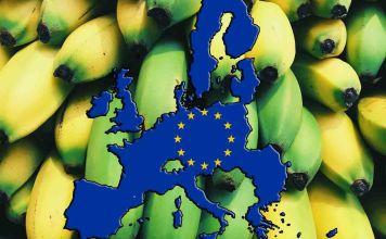 el Banano ecuatoriano bajo regulaciones del Parlamento Europeo