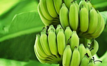 Consumo de banano ecuatoriano crece en el mundo
