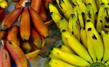 El banano ecuatoriano en la industria de la construcción