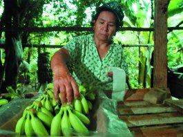 mujeres en producción banano